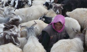 A scene from Shepherdess of the Glaciers