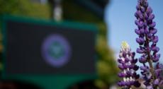 Wimbledon 2021 has been cancelled